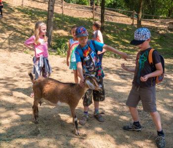 MINI zoo na Skalce se rozrůstá